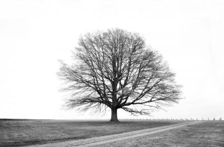 Will-Salter_Red-Hill-Oak
